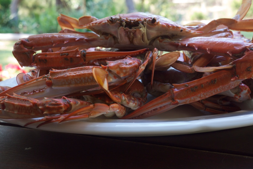 Blue Manor Crab - cooked